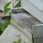 beekeeping-438533_1920