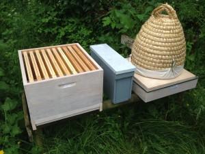 hive-985081_1920